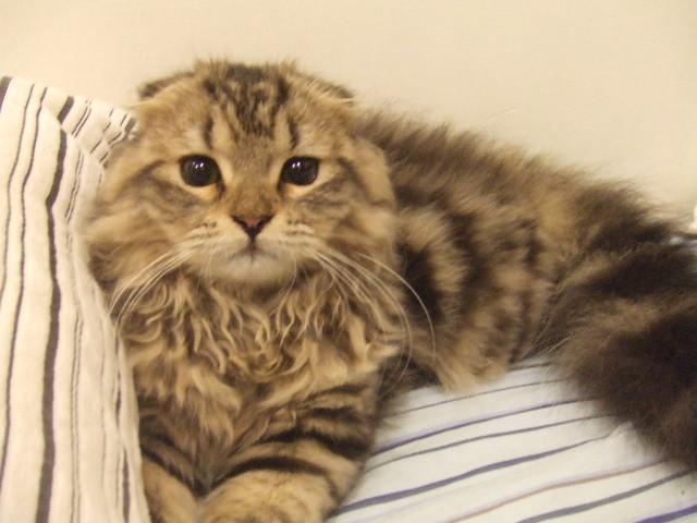 敏怡養的貓原始照片