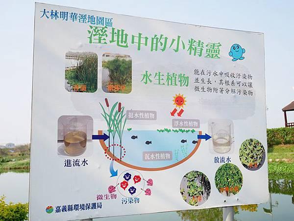 明華濕地2.JPG