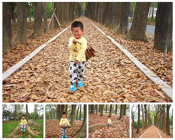 [高雄]新威森林公園,桃花心木綠色隧道,落葉地毯詩意無窮/高雄六龜親子景點