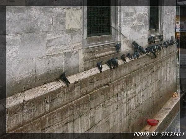 伊斯坦堡-耶尼清真寺09.jpg