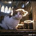 貓17.jpg