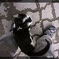 貓06.jpg
