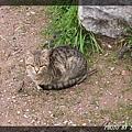 貓12.jpg
