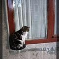 貓14.jpg