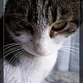 貓16.jpg