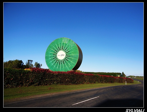 kiwi360.jpg