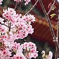 20150316南港經貿路饒公館19.JPG