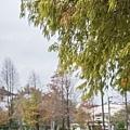 M45A0568.jpg
