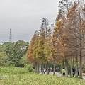 M45A0581.jpg