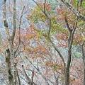 M45A0419-2.jpg