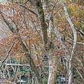 M45A0421-2.jpg