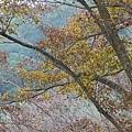 M45A0424-2.jpg