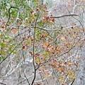 M45A0434-2.jpg