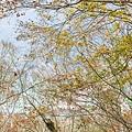 M45A0444-2.jpg