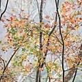 M45A0470-2.jpg