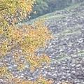 M45A0535-2.jpg