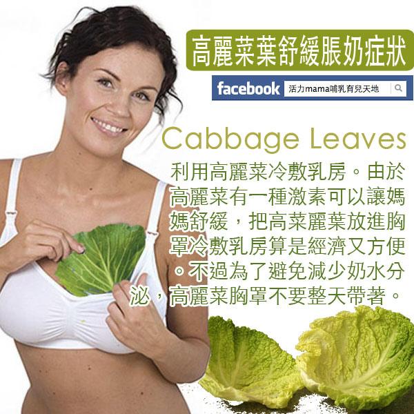 產後脹奶-利用高麗菜葉舒緩乳腺阻塞乳腺炎.jpg