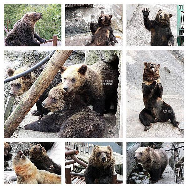 北海道熊集合