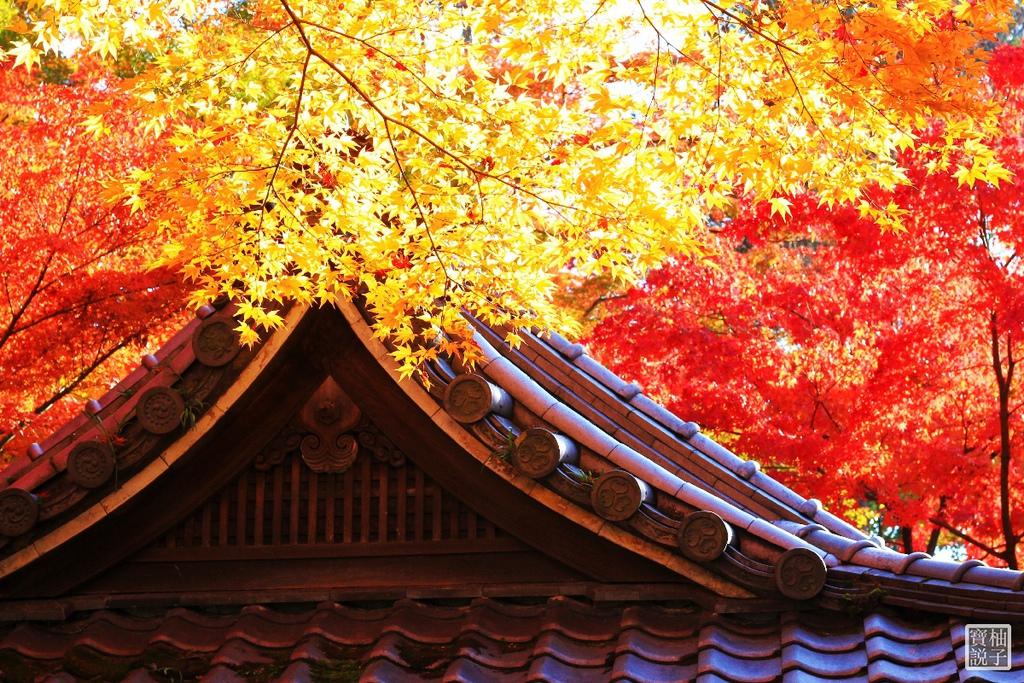 永觀堂_9457.jpg