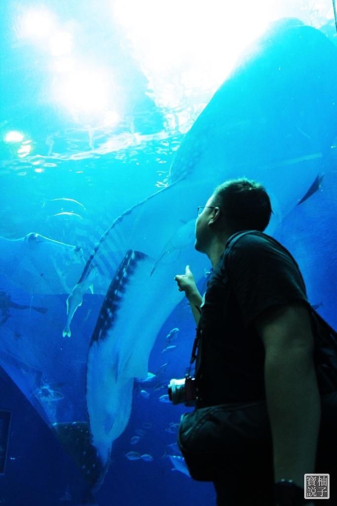 沖繩美麗海水族館_1112.JPG