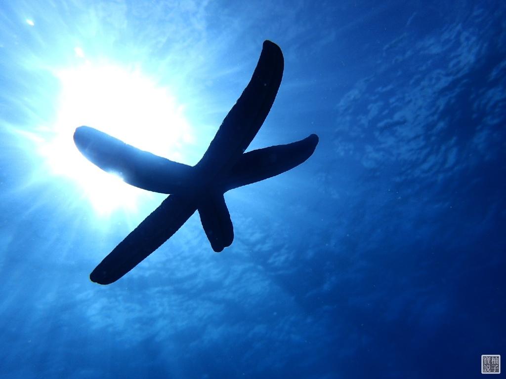 My Diving 浮潛潛水700-1.jpg
