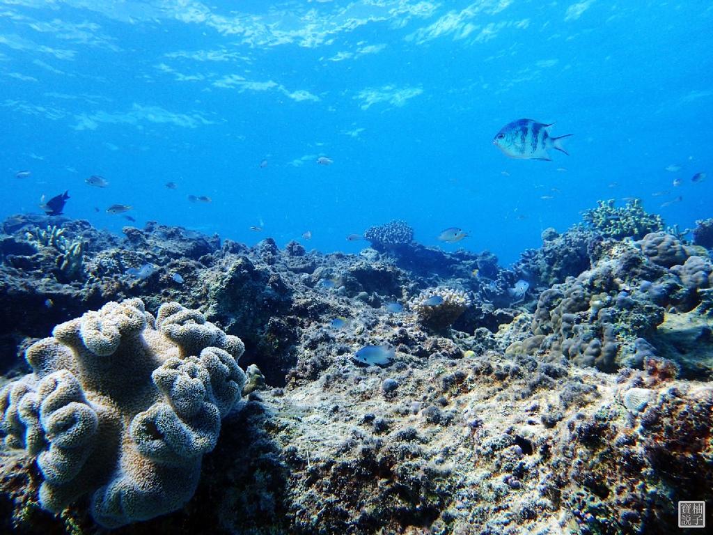 My Diving 浮潛潛水715-1.jpg