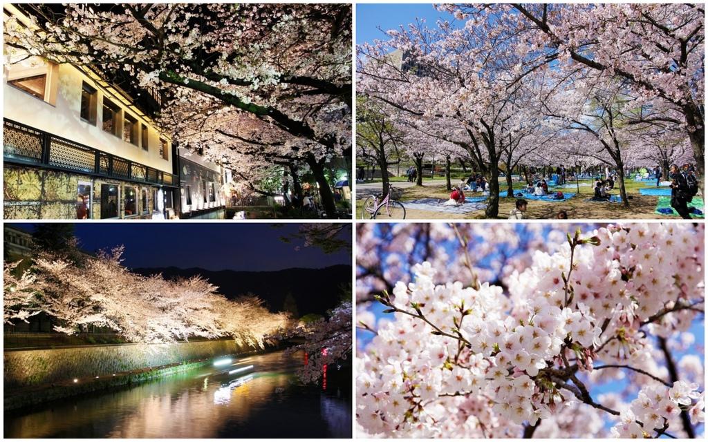 櫻花季集合圖.jpg