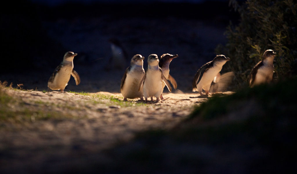 Penguin-Parade-11-small.jpg