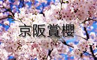京阪賞櫻-1.jpg
