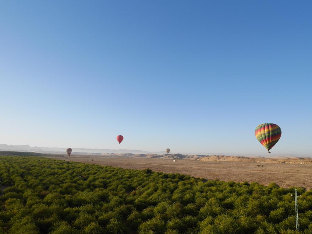 路克索-熱氣球 26.JPG
