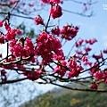 120206_34_龍年行大運.jpg