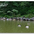 100602_24_明池.jpg