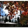 090708_01_福壽山楓葉.jpg