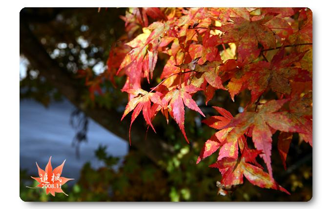 090708_09_福壽山楓葉.jpg