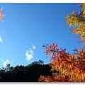 090710_08_武陵農場.jpg