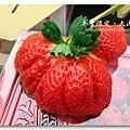 091227_24_大湖草莓.jpg