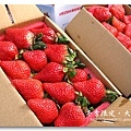 091227_36_大湖草莓.jpg