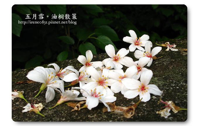 100501_12_龍潭追桐.jpg