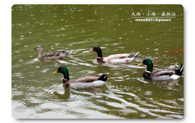 100523_11_明池.jpg