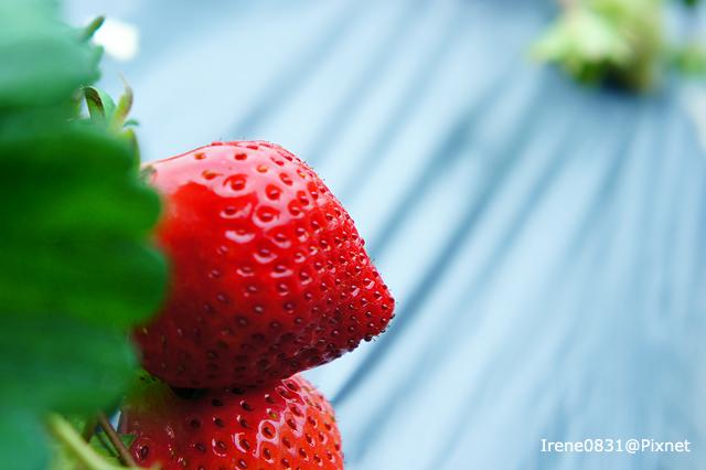 110123_16_大湖草莓.jpg