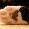 Cat_paw_(cloudzilla).jpg