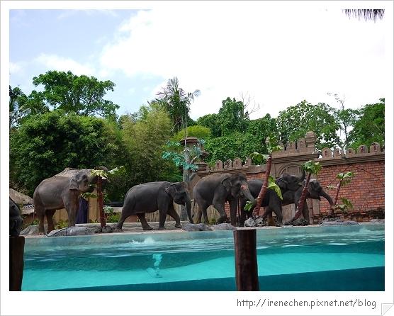 Bali352-野生動物園(有很多大象).jpg