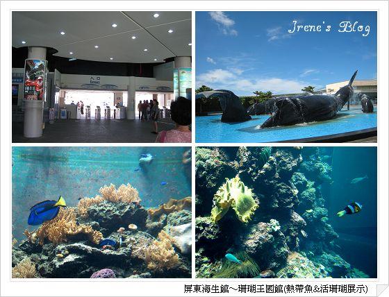 海生館1-熱帶魚&活珊瑚.jpg