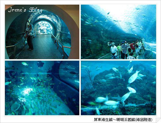 海生館2-海底隧道.jpg