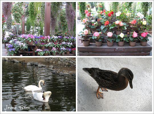 5-02-神戶花鳥園5.jpg