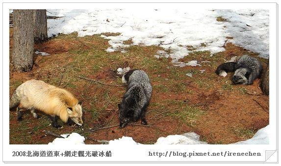 北海道-022北見狐狸村-3.jpg