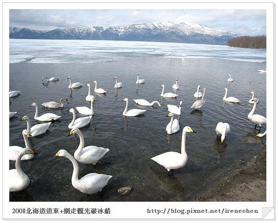 北海道-038屈斜路湖(白鳥飛來地1).jpg