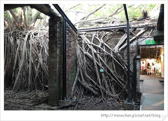 安平樹屋06-屋中有樹樹中有屋.jpg
