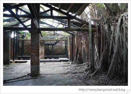 安平樹屋13-屋中有樹樹中有屋.jpg