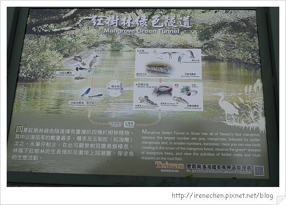 坐船遊台江04-紅樹林綠色隧道.jpg
